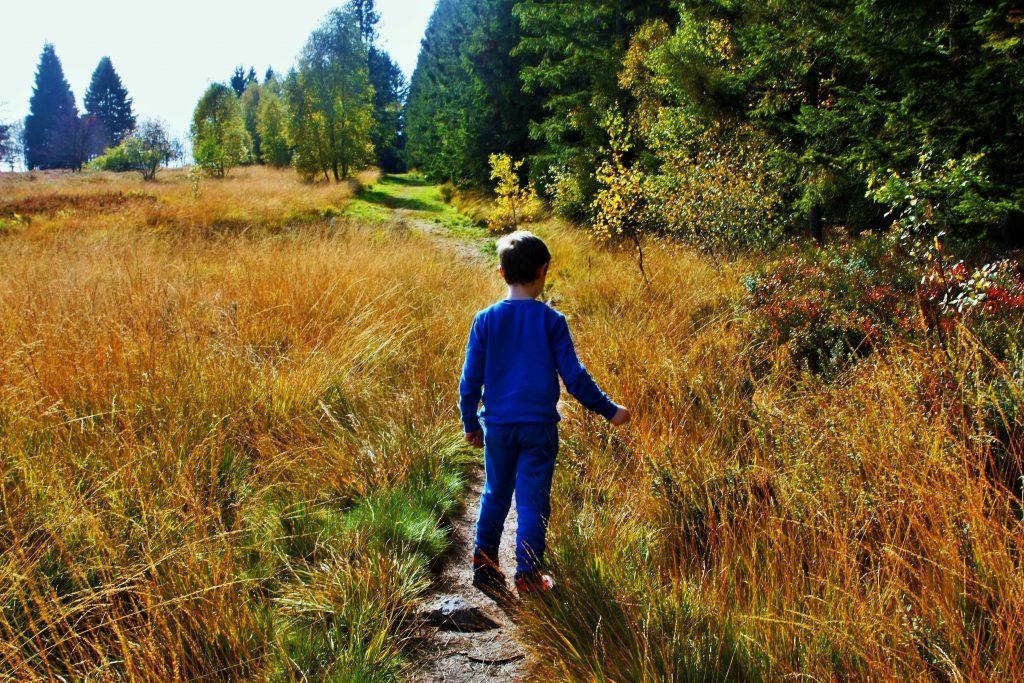 wandeling in de ardennen les 2 vallees weiden en bossen