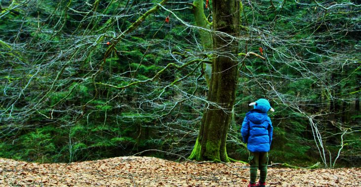 Stam groen boom bos wandeling heppenbach