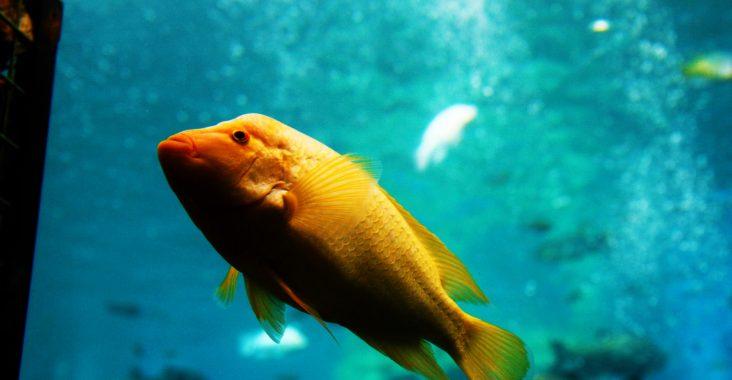 originele daguistap snorkelen Beringen TODI tropische zoetwatervissen