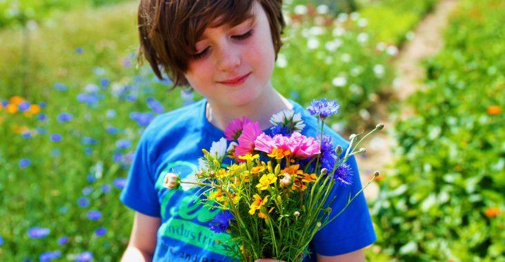 ferm plukboerderij bloemenweide zelf bloemen plukken bloemenweide wildboeket eetbare bloemen fruitplukken korte keten bio boerderij (2)