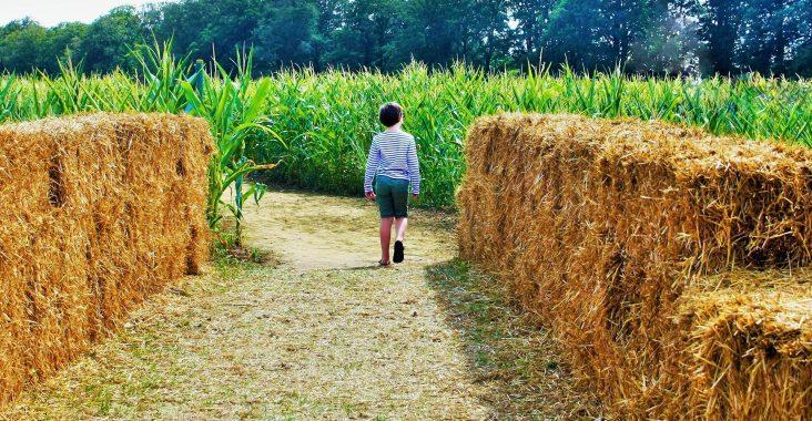 maisdoolhof putte mais kempisch landschap weg met kinderen (2)