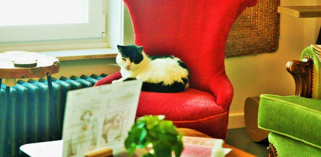kattencafe-lierse-aaikes-kattenbrunch-origineel-brunchen-origineel-ontbijten-spelen-met-katten-katcafe-origineel-weg-met-kinderen-uistapjes-met-kinderen-lier-visit-lier-2