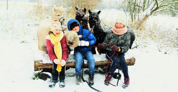 wandelen met alpaca's hakuna alpaca dierenwandeling origineel gaan wandelen met dieren wattedoen weg met kids originele uitstapjes met kinderen alpaca uitstap (2)