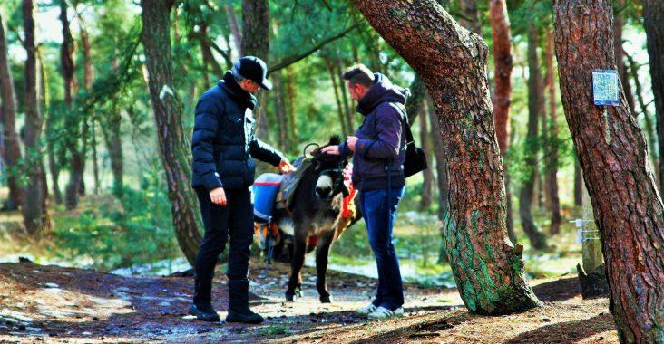 ezelswandeling wandelen met de ezel picknick met de ezel bosland lommel de sahara visit lommel vlaanderen vakantieland op stap met de ezel uitstapjes kinderen riebedebie